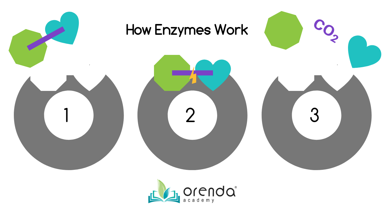 orenda enzymes, pool enzymes, simplypure, simply pure enzymes, natural pool products, non-living organics